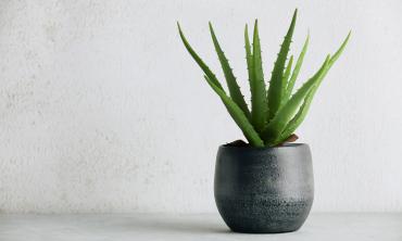 Plante artificielle - Aloe vera